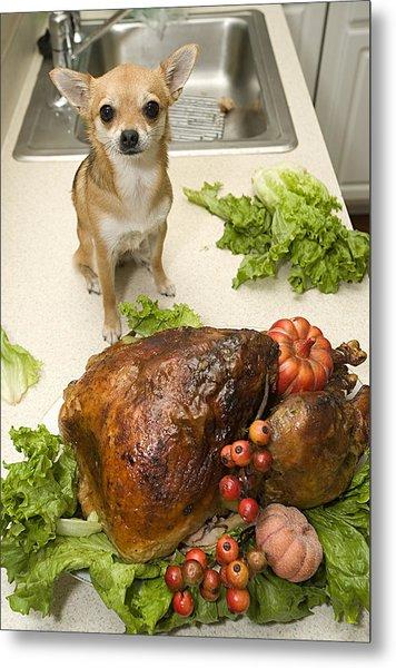 Turkey And Dog Metal Print