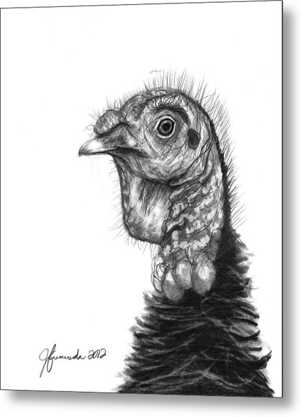 Turkey Bird Metal Print