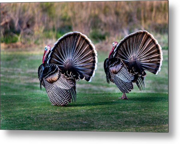 Turkey Metal Print
