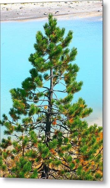 Turquoise Tree Metal Print