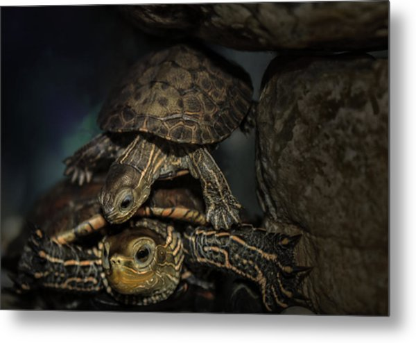 Turtels Metal Print by Amr Miqdadi