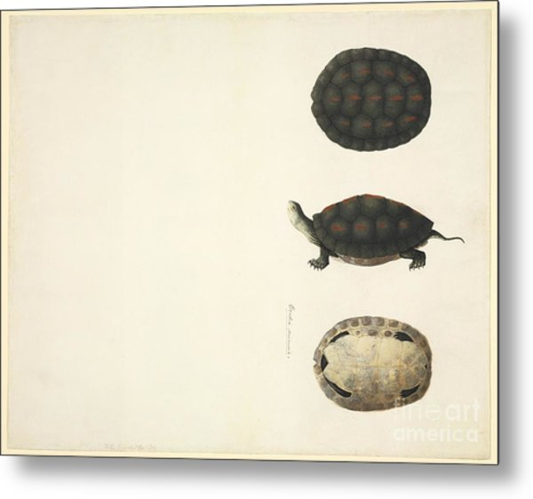 Turtle Anatomy 19th Century Photograph By Natural History Museum