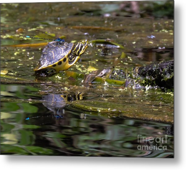 Turtle And His Friend Metal Print