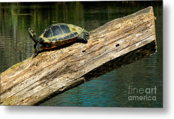 Turtle Sunning On The Log Metal Print