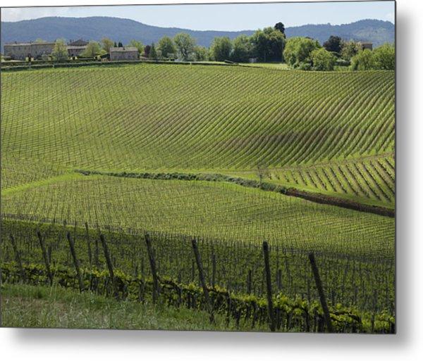 Tuscany Vineyard Series 2 Metal Print
