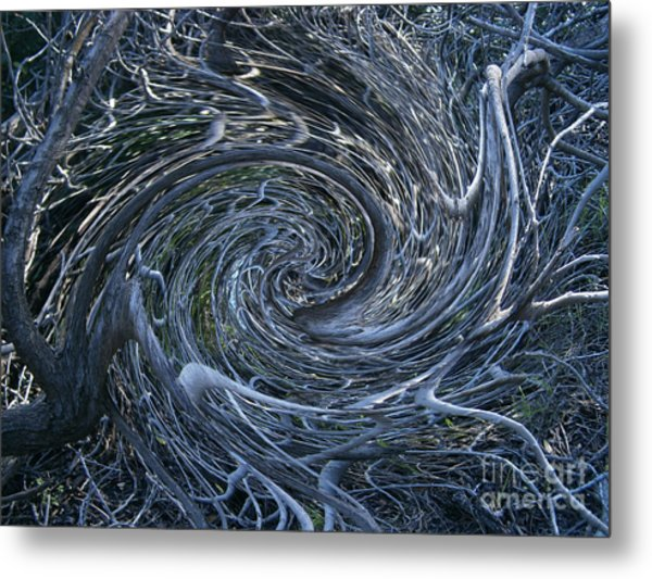 Twisted Briar Metal Print by Drew Shourd