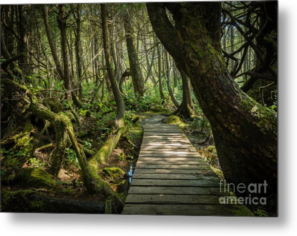 Twisted Forest Metal Print