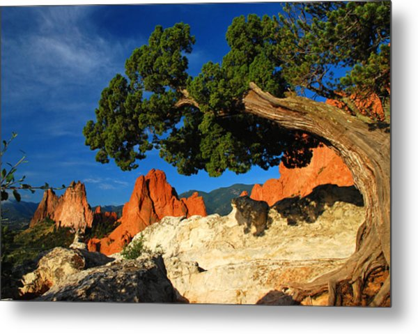 Twisted Juniper At The Garden Metal Print