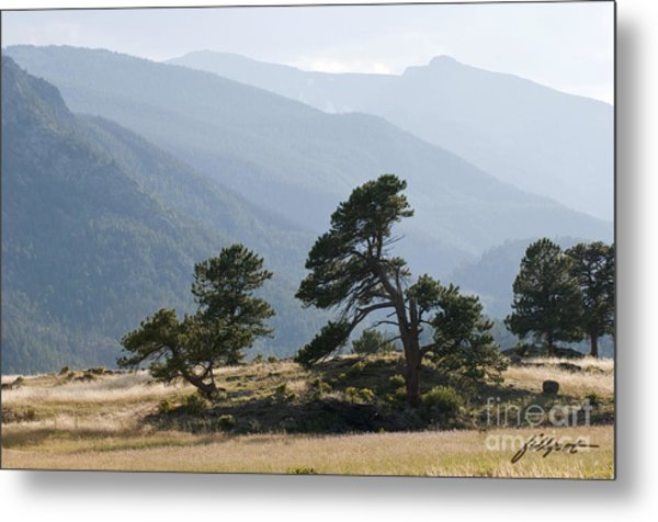 Twisted Pines Metal Print