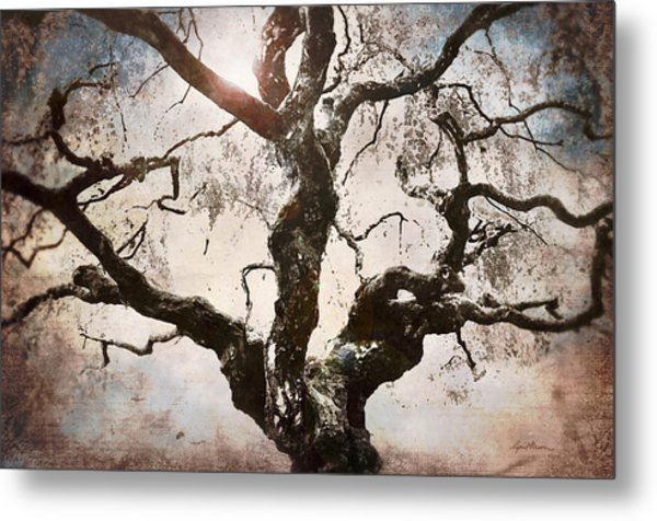 Twisted Tree I Metal Print