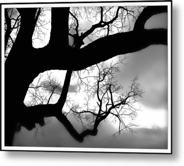Twisty Tree Silhouette Metal Print