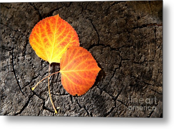 Two Aspen Leaves Metal Print