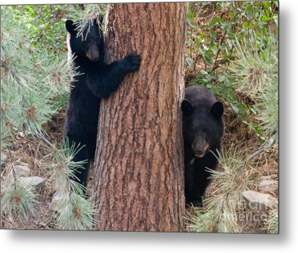 Two Bears Metal Print