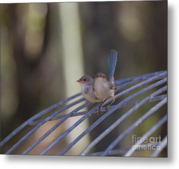 Two Birds On Wire Metal Print