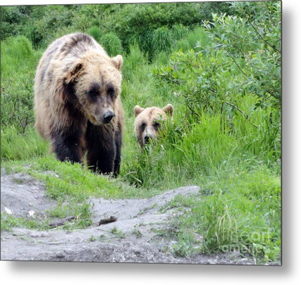 Two Brown Bears Metal Print
