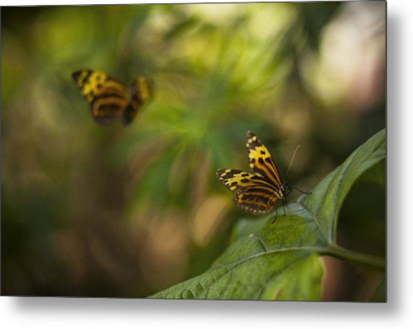Two Butterflies Metal Print