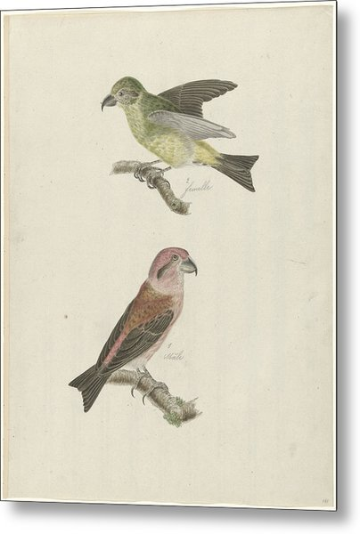 Two Crossbills, Possibly Christiaan Sepp Metal Print