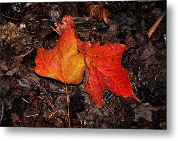 Two Fallen Autumn Leaves Metal Print