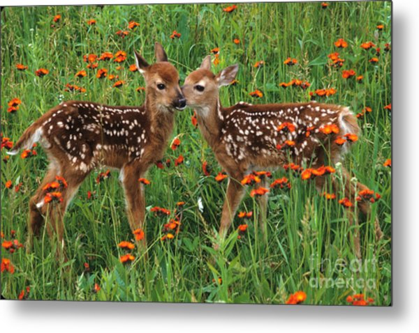 Two Fawns Talking Metal Print