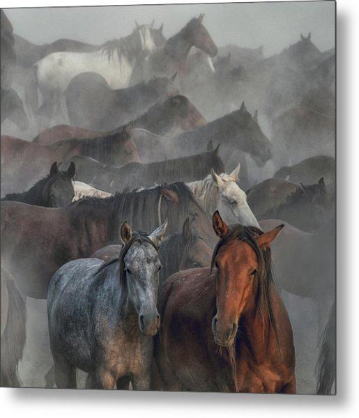 Two Horses Metal Print by H??seyin Ta??k??n