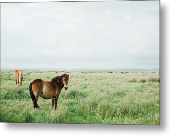 Two Horses In Field Metal Print by Suzanne Marshall