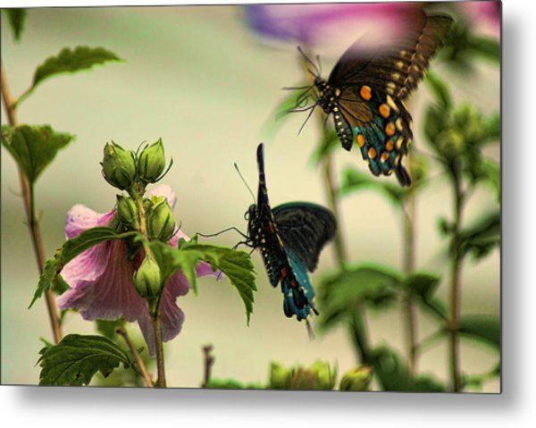 Two In Flight Metal Print