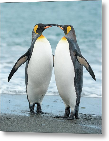 Two King Penguins On A Beach In South Metal Print by Elmvilla