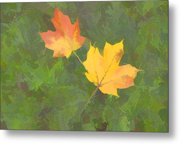 Two Leafs In Autumn Metal Print by Indiana Zuckerman