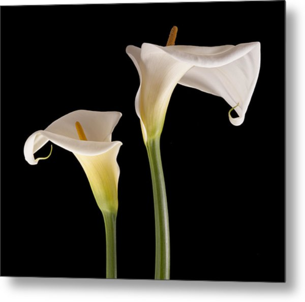 Two Lilies Metal Print