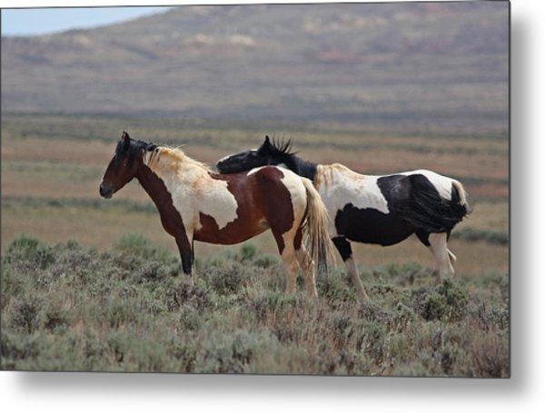 Two Mustangs In Wyoming Metal Print