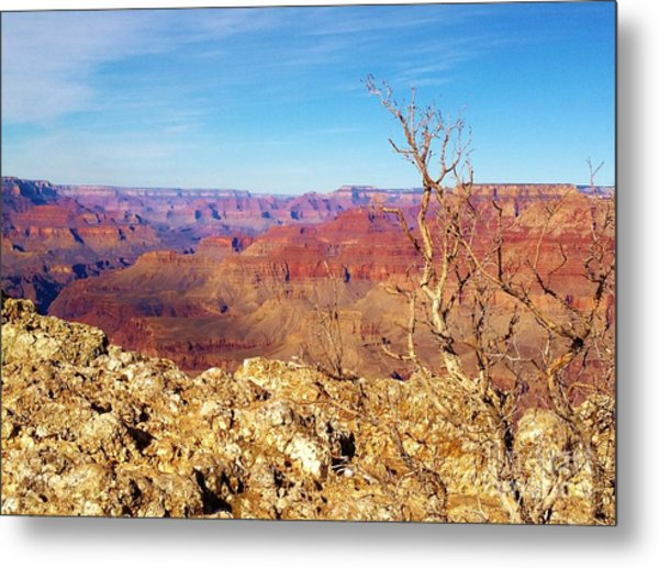 Two One Hundred Eighty Two Metal Print by Debbie L Foreman
