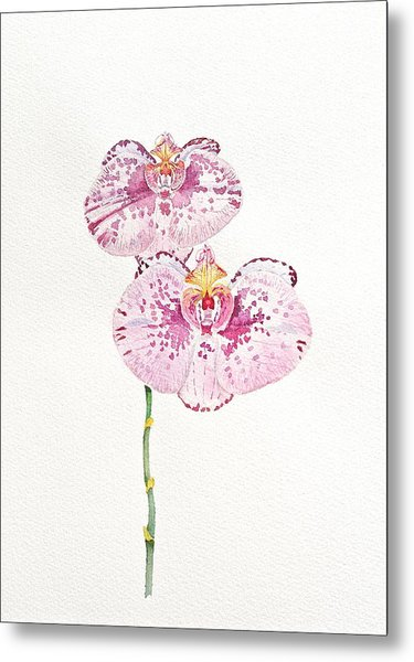 Two Orchids Metal Print