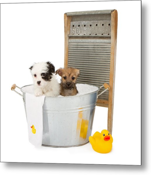 Two Puppies Taking A Bath Metal Print