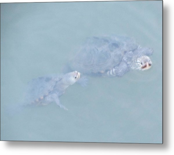 Two Rare Turtles Swam Up To See Metal Print by Debbie Nester