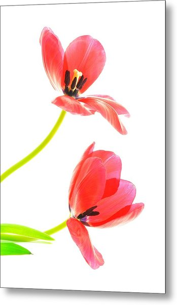 Two Red Transparent Flowers Metal Print