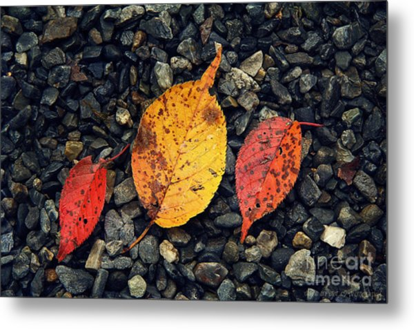Two Reds And A Yella Metal Print