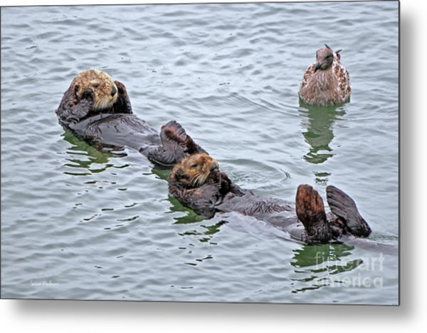 Two Sea Otters And A Gull Metal Print