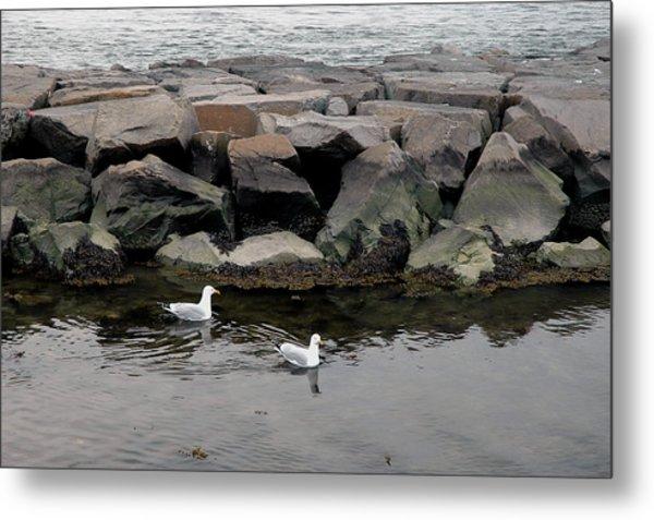 Two Seagulls Metal Print