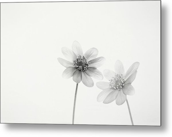 Two Small Flowers Metal Print