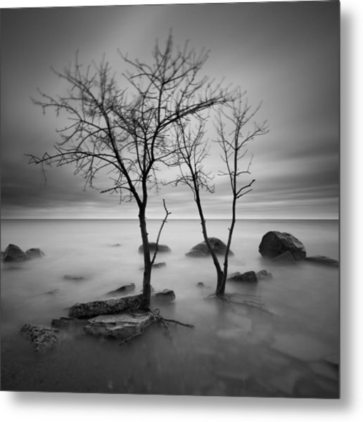 Two Trees Walking Metal Print