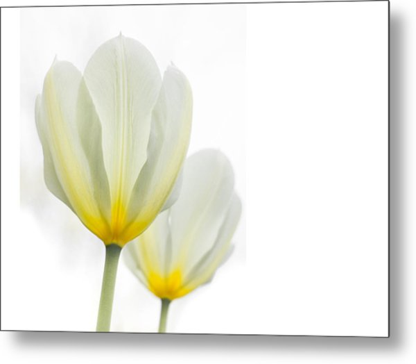 Two Tulips 1 Metal Print