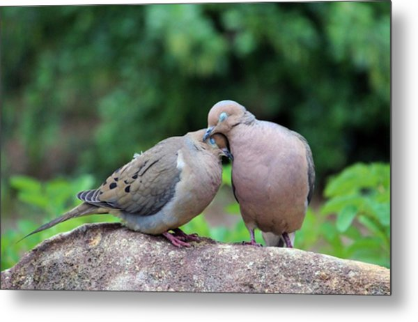 Two Turtle Doves Metal Print