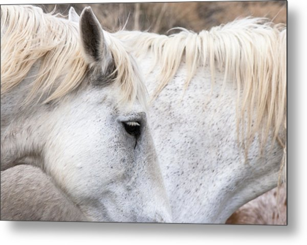 Two White Horses Metal Print