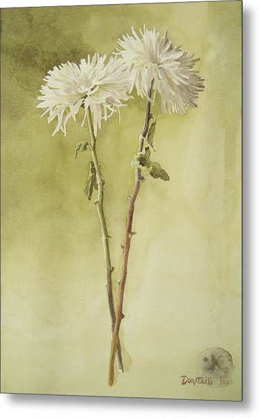 Two White Mums Metal Print