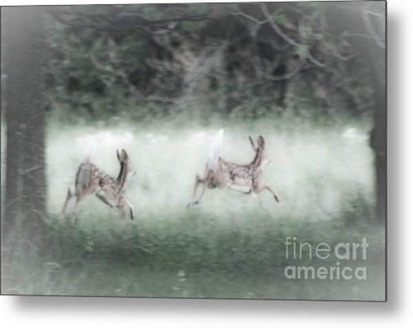 Two Whitetail Fawns Running Metal Print
