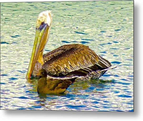 Two's Company Metal Print by Brian D Meredith