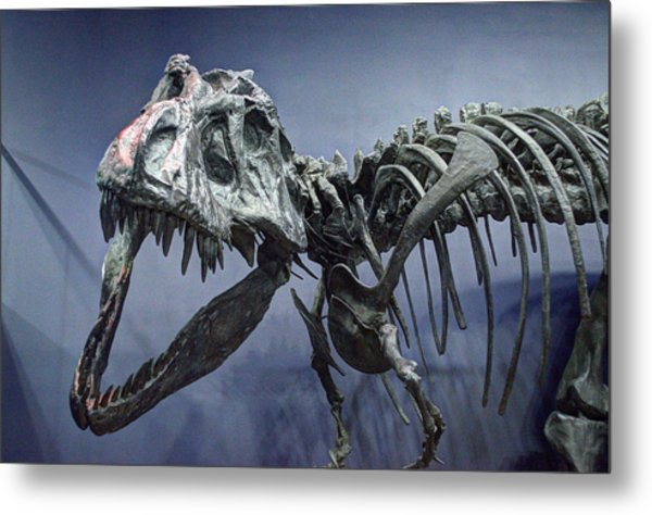 Tyrannosaurus Jane Metal Print