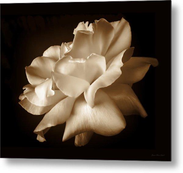 Umber Rose Floral Petals Metal Print