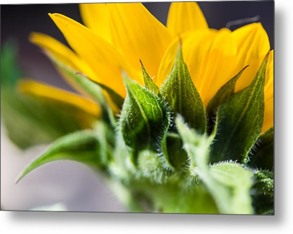 Under A Sunflower Metal Print