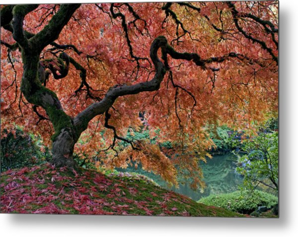 Under Fall's Cover Metal Print